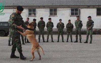 Polícia do Exército – Secção Cinotécnica